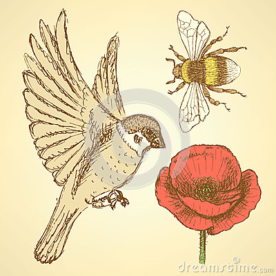 Free Sketch Poppy, Bee And Sparrow In Vintage Style Stock Photography - 46915332