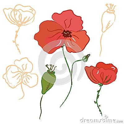 Sketch of poppy flower
