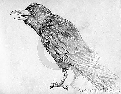 Sketch of raven