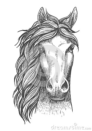 Free Sketched Arabian Purebred Horse With Alert Ears Royalty Free Stock Photo - 73833575