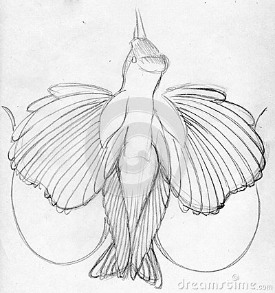 Sketched bird of paradise