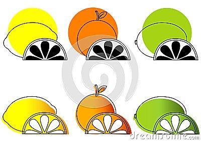 Sketched Citrus Fruits