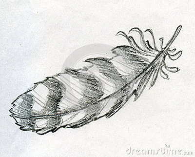 Sketched eagle feather