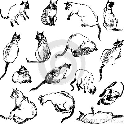 Sketches cat