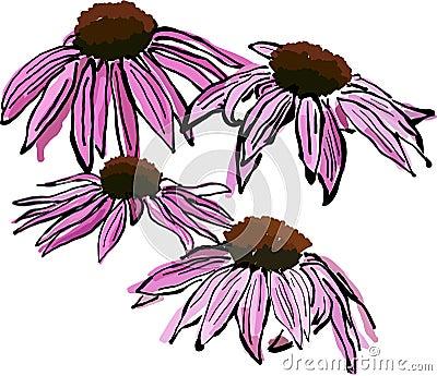 Sketchy Echinacea flowers