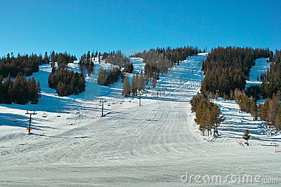Ski hill and trees
