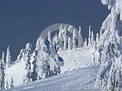 Ski slope with fresh tracks