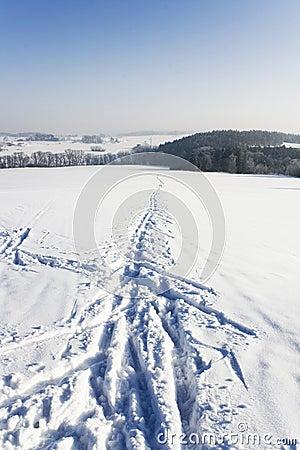 Ski track detail