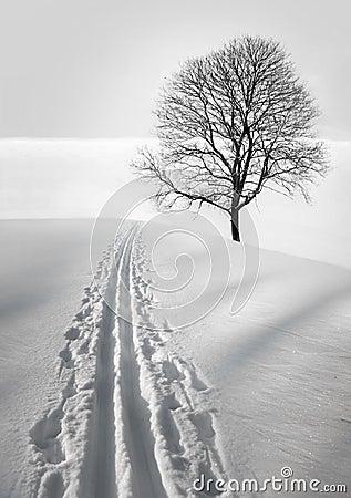 Ski track and tree