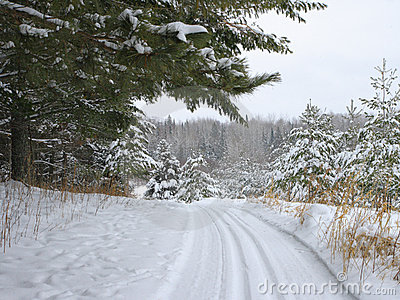 Ski trail in the forest