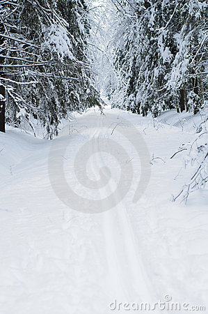 Free Ski Trails In Snowy Woods Royalty Free Stock Images - 21998739