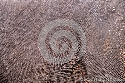 Skin elephant