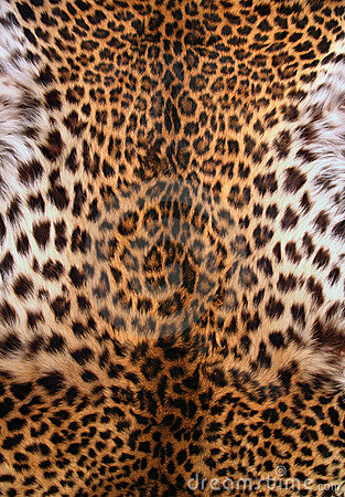 Free Skin Of The Leopard Royalty Free Stock Photo - 5069365