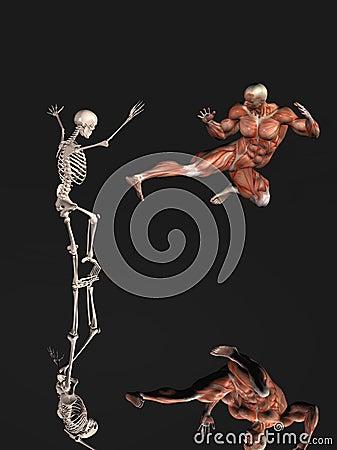 Skinless man and skeleton