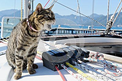 Skipper cat