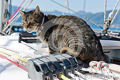 Skipper cat