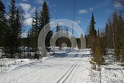 Skitrack in early spring