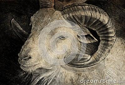 Skizze gemacht mit digitaler Tablette des Ziegenkopfes mit großen Hupen