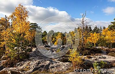 Skog av Fontainebleau