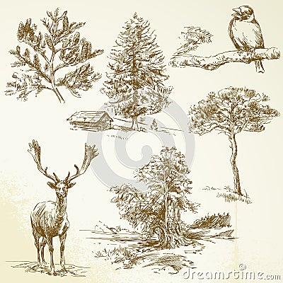 Skog djur, natur