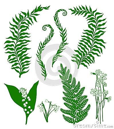 Skogväxter