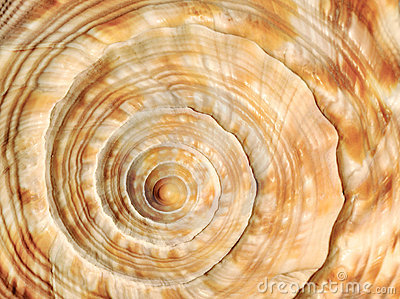 Skorupy denna spirala