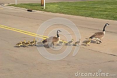 Skrzyżowanie ulic