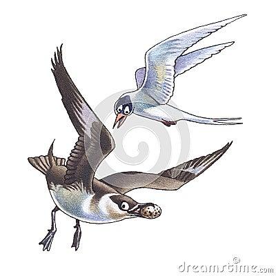Skua and seagull_2
