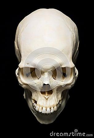 Free Skull Royalty Free Stock Image - 12007916