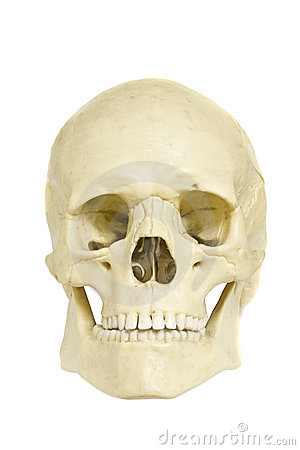 Free Skull Royalty Free Stock Images - 14216039