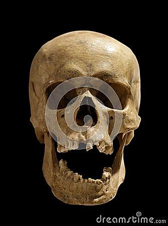 Free Skull Stock Photography - 20366612