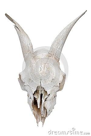 Free Skull Stock Images - 26777284