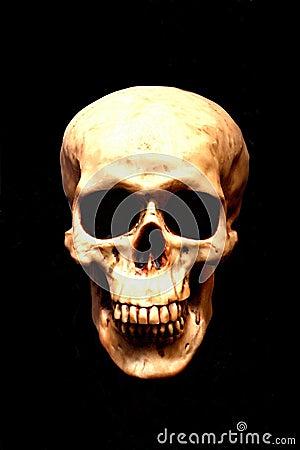 Free Skull Royalty Free Stock Photography - 34534197