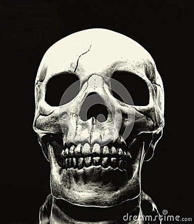 Free Skull Royalty Free Stock Photos - 34534198