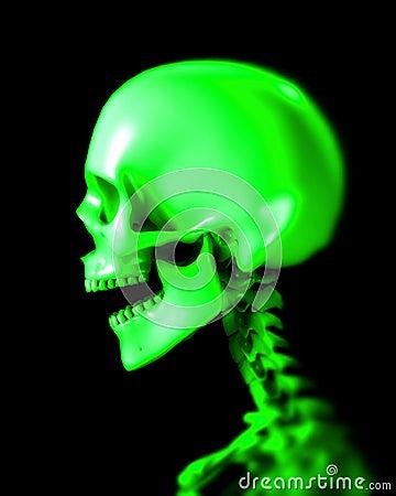Skull 48