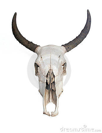 Free Skull Stock Photography - 6513002