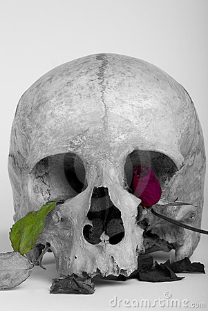 Free Skull And Rose Stock Photos - 20199993