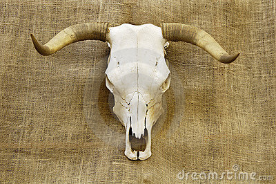 Skull on burlap