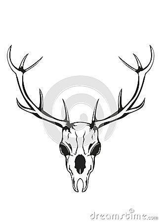 Skull of deer with horns