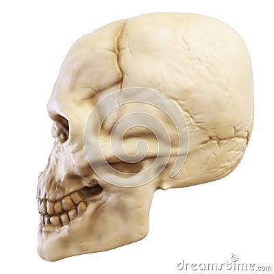 Skull_left