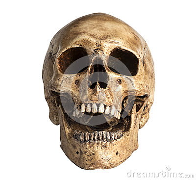 Free Skull Model Stock Photos - 39643533