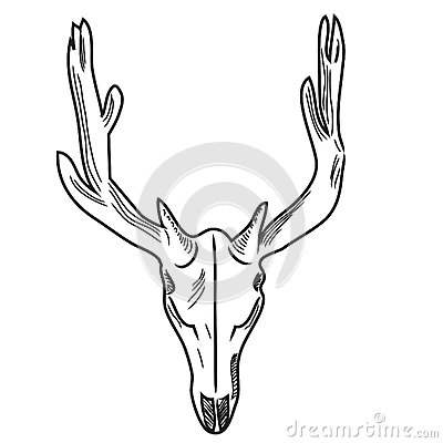 Free Skull Of A Deer Stock Image - 44193881