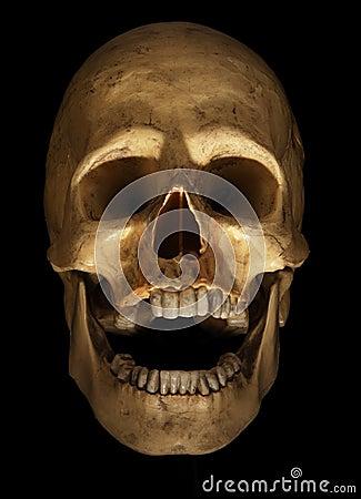 Free Skull On Black Stock Photography - 1584372
