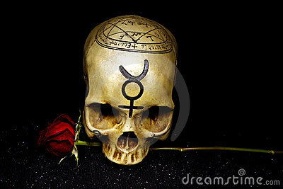 Skull and Rose with copy space