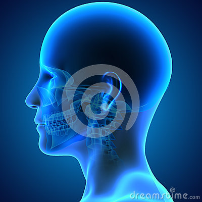 Free Skull With Face Stock Photography - 47649182