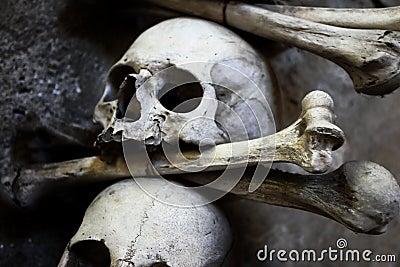 Skulls and bones