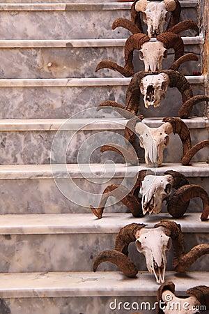 Skulls on stairs