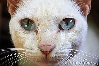 Sky blue cat eye
