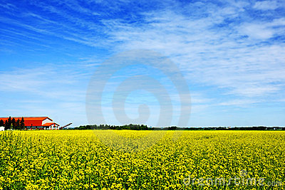Sky, farm and canola or rapeseed field