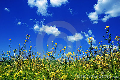 Sky with flowers